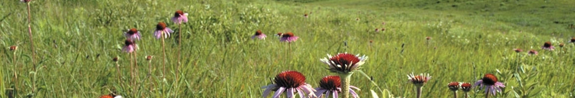 Eastern Tallgrass Prairie and Big Rivers Landscape Conservation Cooperative
