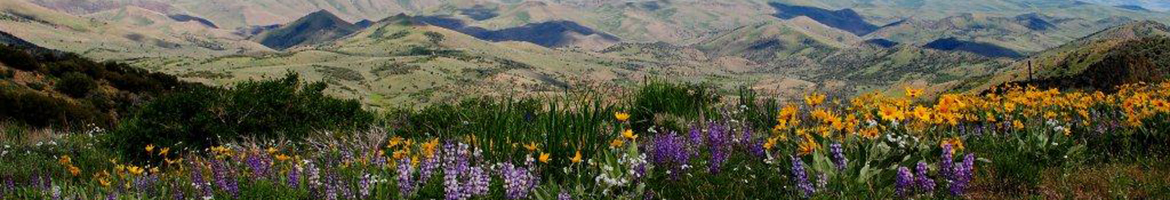 Great Basin Landscape Conservation Cooperative