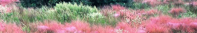 Gulf Coast Prairie Landscape Conservation Cooperative