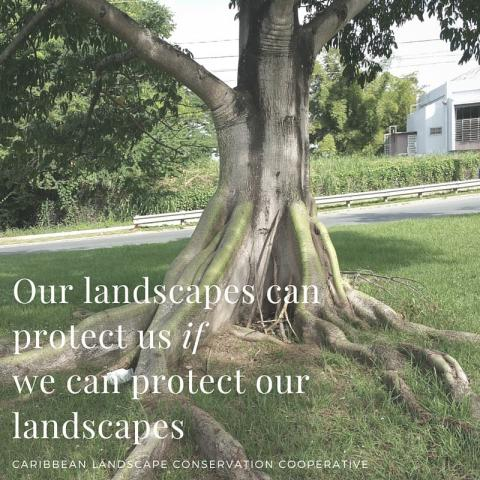 Our landscapes can protect us, if we can protect our landscapes