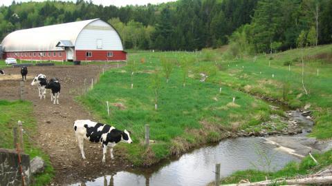 A dairy farm in Vermont.