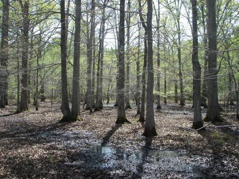 Bottomland hardwood forest