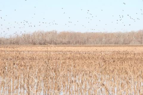 Grand Cote National Wildlife Refuge, Louisiana