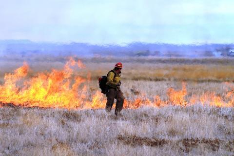 Prescribed fire on sagebrush habitat