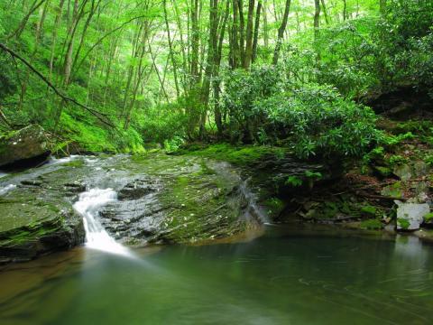 Seneca Creek, West Viriginia