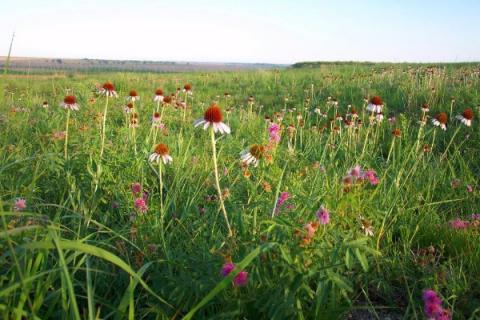 Mixed grass prairie at Kirwin National Wildlife Refuge.