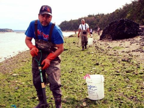 Swinomish Indian Tribal Community gathering shellfish.