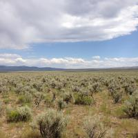 Photo of sage-steppe